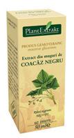 Extract de Muguri de Coacaz Negru