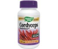 Cordyceps x 60cps