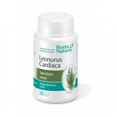 Leonurus Extract (talpa gastii) 30cps